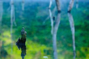 朝の湖畔の素材 [FYI00134849]