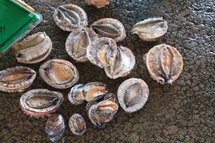 漁協で水揚げ中のアワビ1の写真素材 [FYI00134896]