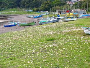 浜昼顔の咲く海岸の写真素材 [FYI00134964]