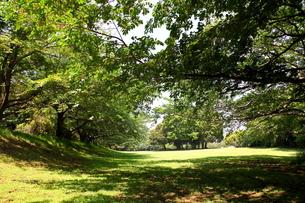 涼しそうな桜の木陰の写真素材 [FYI00135048]