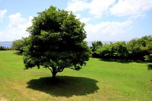 涼しそうな木陰と青空の写真素材 [FYI00135049]