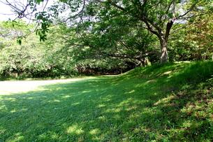 涼しそうな日陰と芝生の写真素材 [FYI00135055]