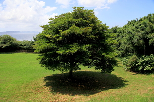 涼しそうな木陰と青空の写真素材 [FYI00135062]