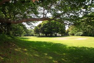 涼しそうな桜の木陰の写真素材 [FYI00135063]