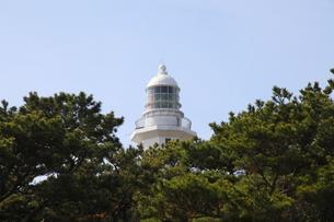松林から見える野島崎灯台の写真素材 [FYI00135064]