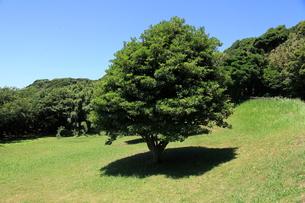 涼しそうな木陰の写真素材 [FYI00135068]