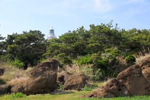 海岸の松林と野島崎灯台の写真素材 [FYI00135077]