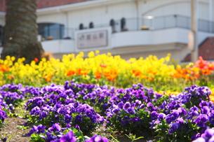 色とりどりの花壇と駅舎の写真素材 [FYI00135098]