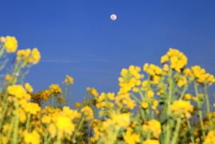 菜の花と月の写真素材 [FYI00135121]