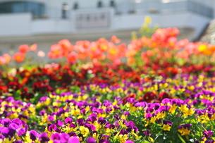 色とりどりの花壇と白い駅舎の写真素材 [FYI00135123]