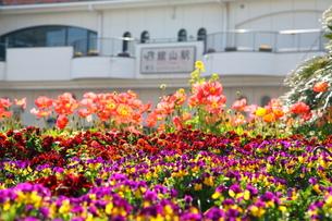 色とりどりの花壇と駅舎の写真素材 [FYI00135126]