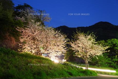 道路脇の桜と夜空の写真素材 [FYI00135173]
