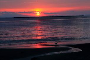 夕陽の海と鳥の写真素材 [FYI00135323]