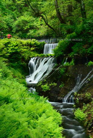 新緑の渓流の写真素材 [FYI00135419]