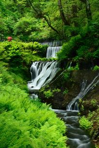 新緑の渓流の素材 [FYI00135419]