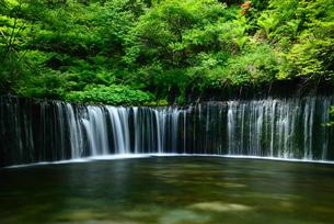 白糸の滝の写真素材 [FYI00135433]