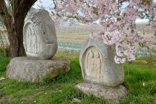 桜と道祖神の素材 [FYI00135483]