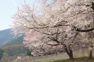 山里の春の素材 [FYI00135490]
