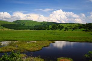 夏の八島湿原の写真素材 [FYI00135506]