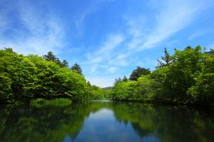 軽井沢・夏の雲場池の素材 [FYI00135596]