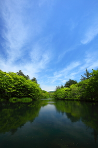 軽井沢・夏の雲場池の素材 [FYI00135599]