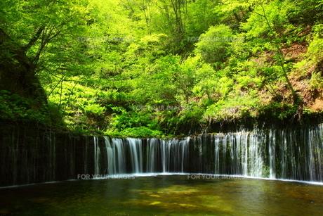 軽井沢・白糸の滝の素材 [FYI00135601]