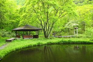 新緑の休憩所の写真素材 [FYI00135668]
