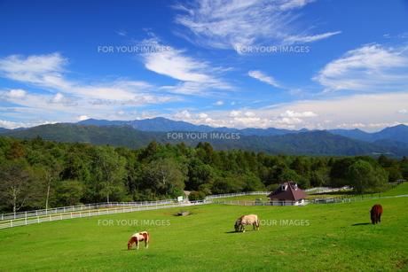 高原とポニーの写真素材 [FYI00135707]