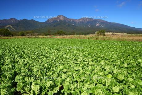 八ヶ岳と高原野菜の写真素材 [FYI00135720]