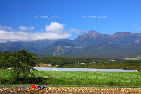 八ヶ岳と高原野菜の写真素材 [FYI00135729]