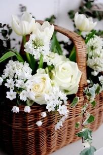 白いお花達の写真素材 [FYI00135997]