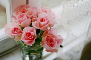 窓辺の薔薇の写真素材 [FYI00135999]