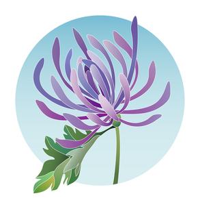 菊の写真素材 [FYI00136075]