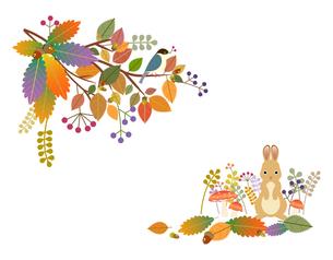 秋の写真素材 [FYI00136171]