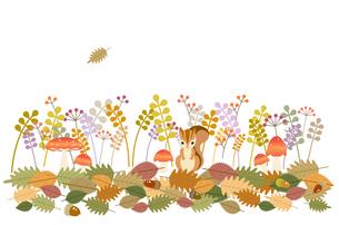 森の秋の素材 [FYI00136176]