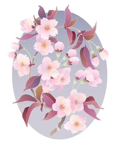 桜の素材 [FYI00136182]
