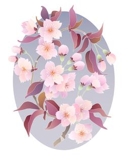 桜の写真素材 [FYI00136182]