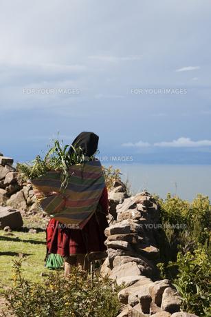 ペルーの草刈りをする女性の写真素材 [FYI00136263]