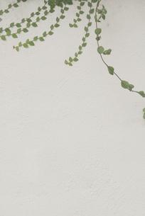 壁につたう草の写真素材 [FYI00136267]