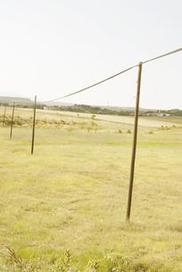 広い草原と電柱の写真素材 [FYI00136272]