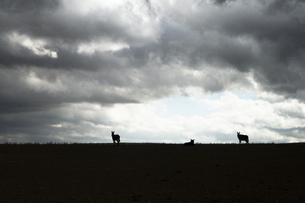 草原と雲とロバの影の写真素材 [FYI00136278]