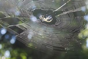 クモの巣の写真素材 [FYI00136285]