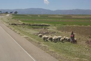 アンデスの女性と羊の群れの写真素材 [FYI00136308]