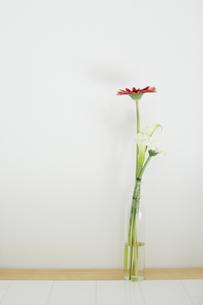 花瓶に差した花の写真素材 [FYI00136312]