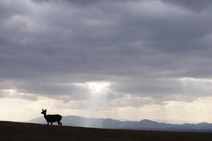 雲の隙間の光と鹿のシルエットの写真素材 [FYI00136318]