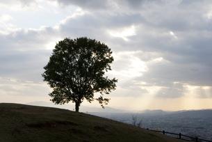 光差す、山と木のシルエットの写真素材 [FYI00136319]