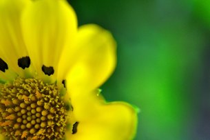 黄色い花のアップの写真素材 [FYI00136322]