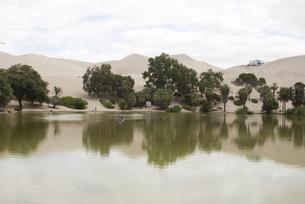 砂漠のオアシスの写真素材 [FYI00136333]