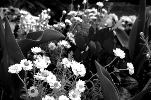 春の花の写真素材 [FYI00136491]