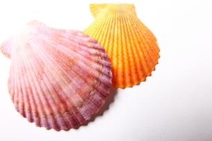 貝殻の写真素材 [FYI00136495]
